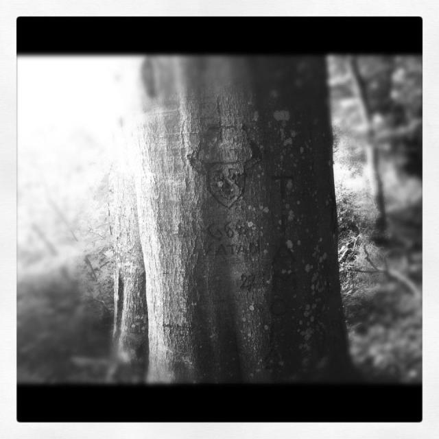 djävulsträdet